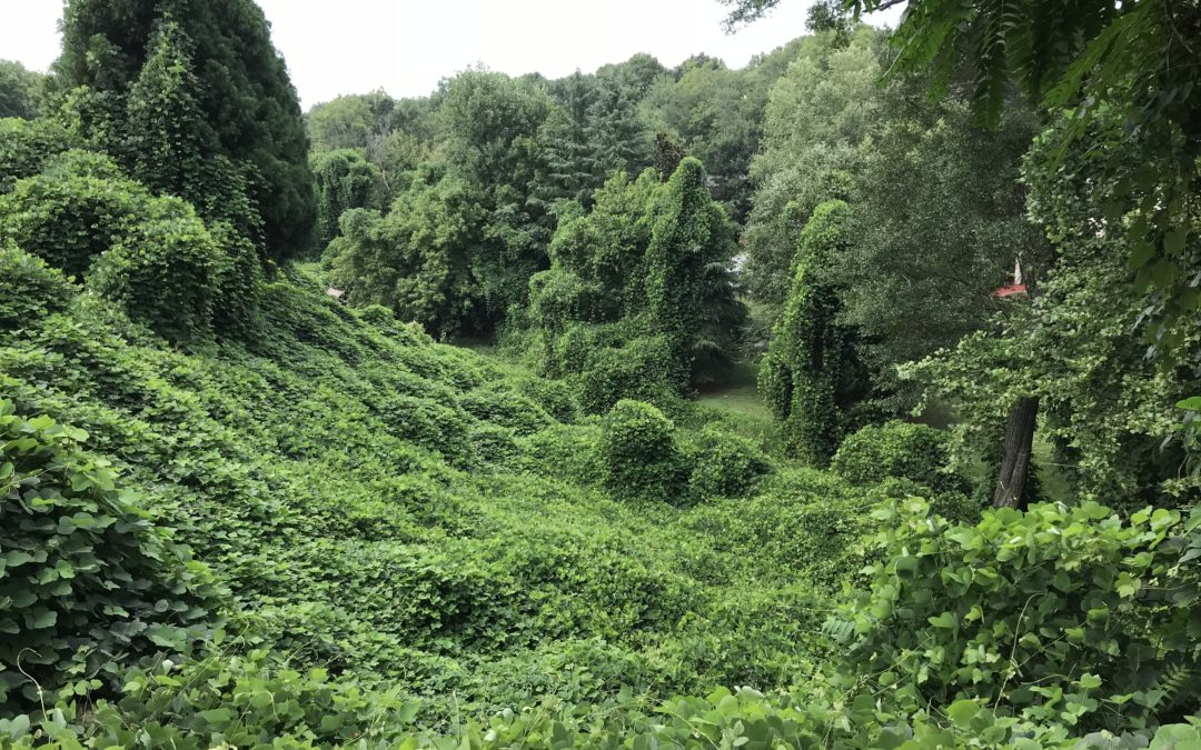 The Chaos Is Coming! One Must-Do for Fighting the Kudzu Craziness of Back to School